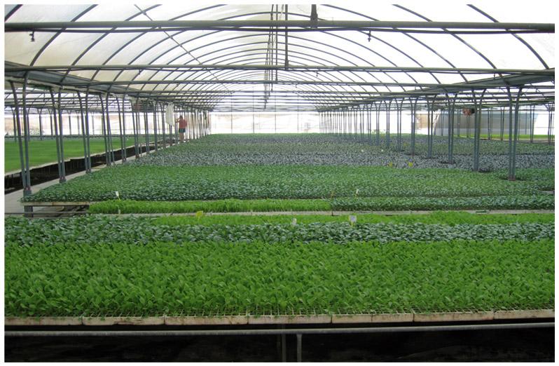 instalacion_planters